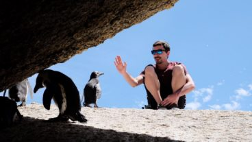 Boulders-Beach-Penguins