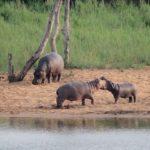 Kruger-National-Park-01